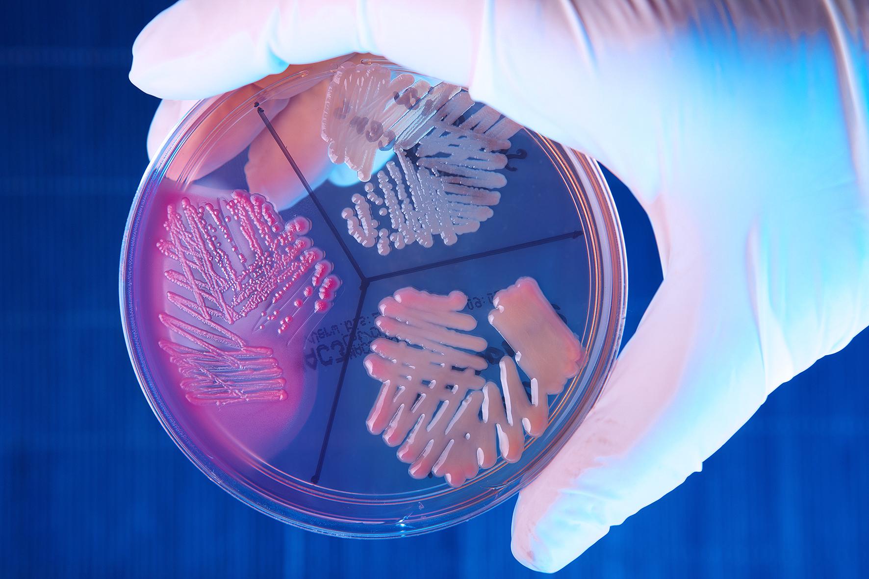enterobacteria