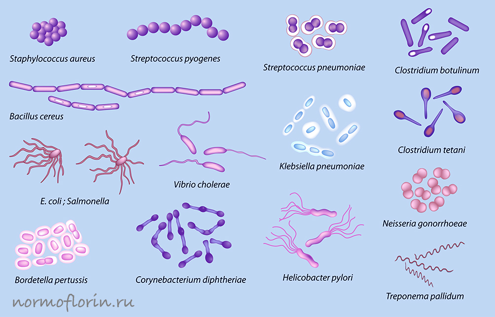 условно-патогенная микрофлора