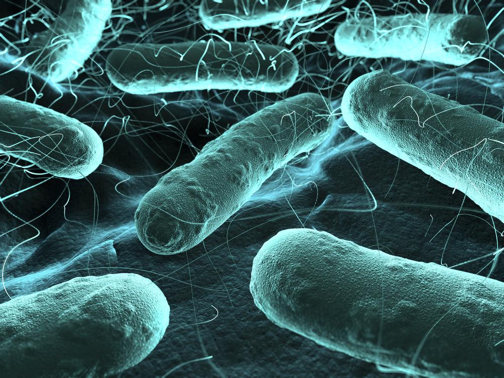 Пропионовые (пропионовокислые) бактерии