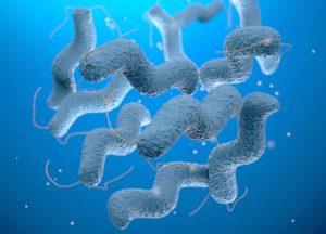 кампилобактерии