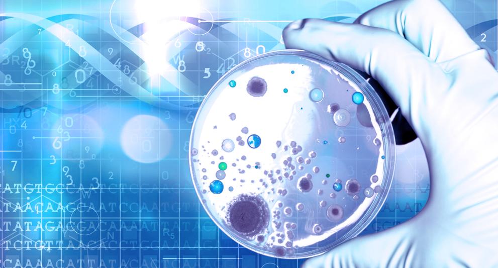 Лечение дисбактериоза (нарушения баланса микроорганизмов)