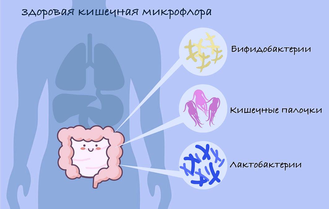 Состав микрофлоры кишечника здорового человека