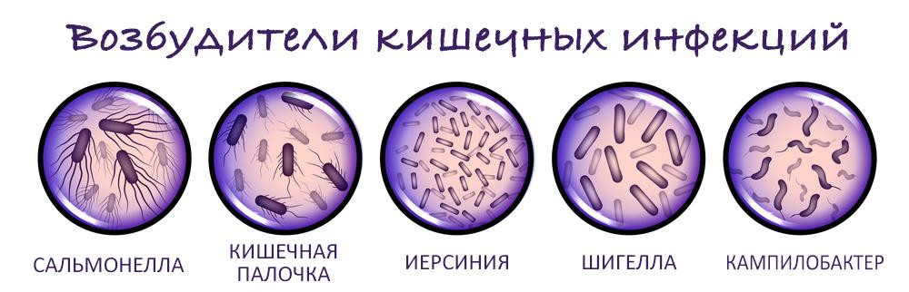 Пищевые отрпавления - бактерии возбудители кишечных инфекций