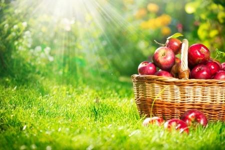 пекто - яблочный пектин