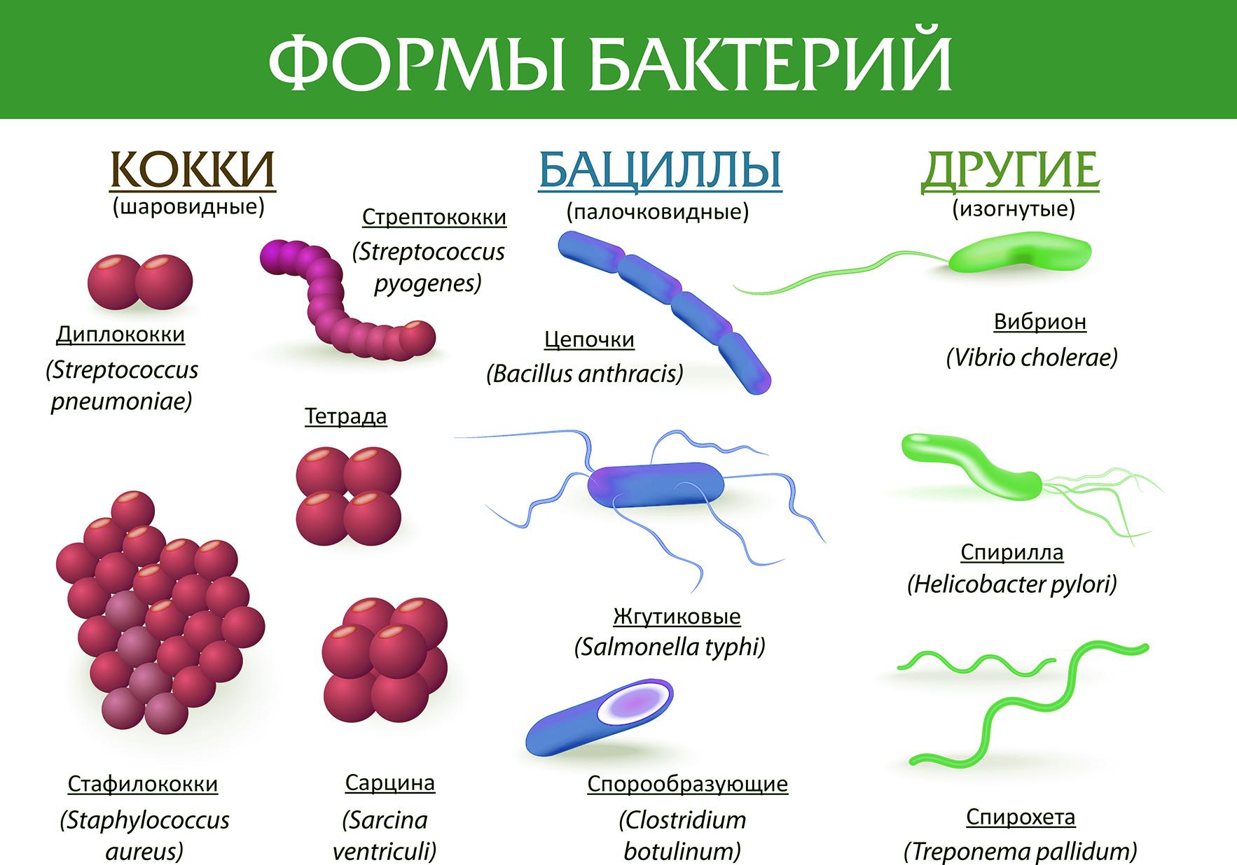 дисбактериоз Болотовский
