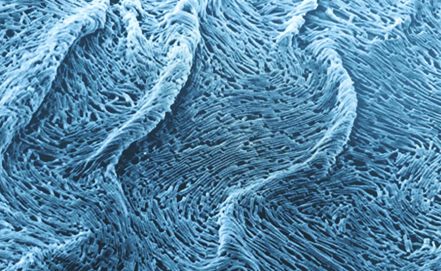 Функции микрофлоры