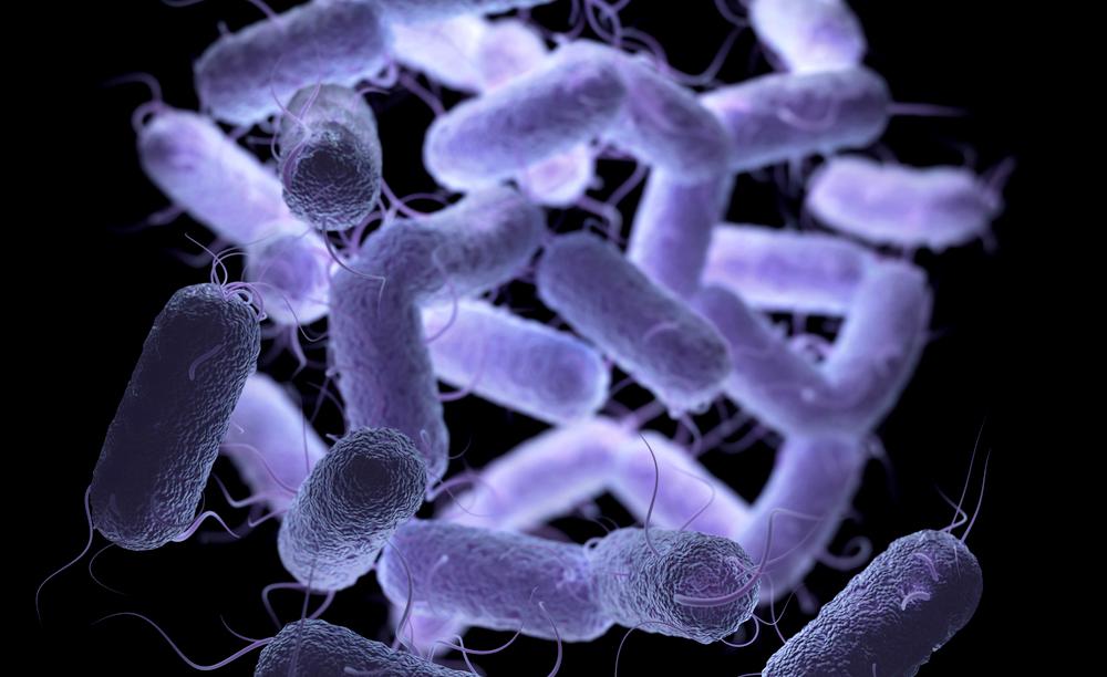 Proteus. Enterobacteriaceae Bacteria Family